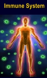 Ormus Minerals Immune System and Chaga Mushrooms